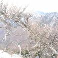 釈迦ガ岳の樹氷