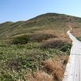 仙ノ倉山へ伸びる木道